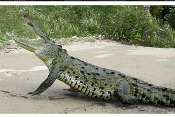 Rainforest Adventure - Lunch - Jungle Crocodile Safari