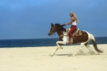 Cabo San Lucas Horseback Beach Ride Intermediate And Advanced Levels