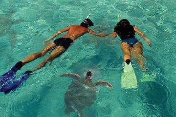 Cruzeiro de Golfinhos e Mergulho com snorkel na Ilha de Lanai, saindo...