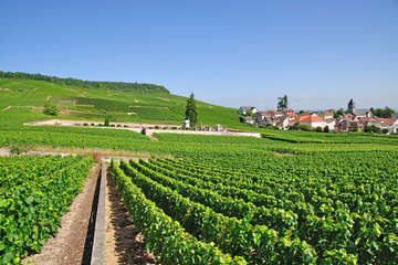 Excursion en petit groupe avec dégustation de vin dans la région de...