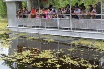 Excursão turística pelos pântanos e igarapés com passeio de barco...