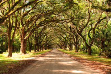 New Orleans Super Saver: Swamp and Bayou Sightseeing plus Oak Alley...