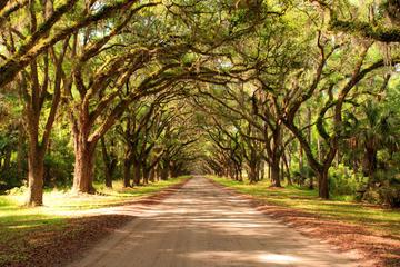 Nueva Orleans superahorro: pantano y...