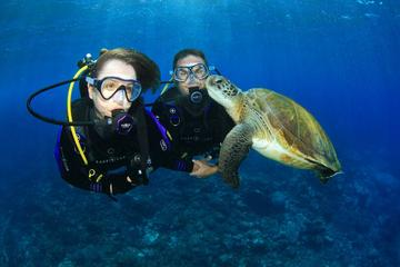 Gold Coast Scuba Diving Experience on...
