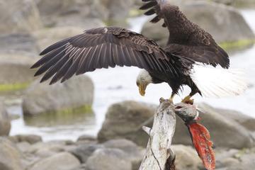 Chilkoot Wilderness and Wildlife Viewing - Skagway Departure
