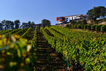 Saint-Emilion Wine Tour and Tastings from Bordeaux