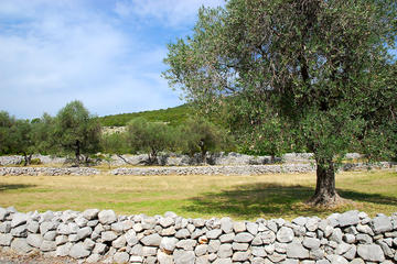 Lustica Peninsula: Organic Olive Farm Private Tour and Tastings