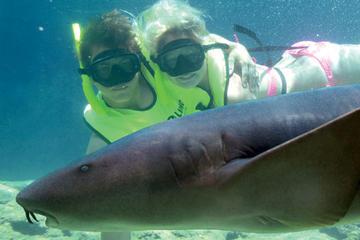 Begegnung mit Haien in Ocean World