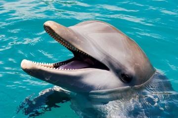 Delfinschwimmen in Ocean World