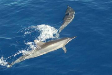 Encuentro combinado con delfines y...