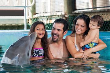 Encuentro con delfines en Ocean World