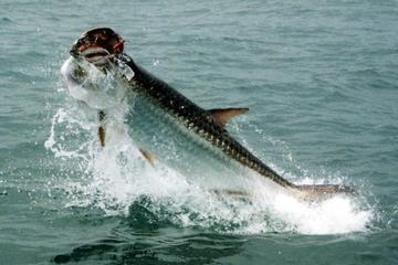 6-hour St Petersburg Inshore Fishing Trip