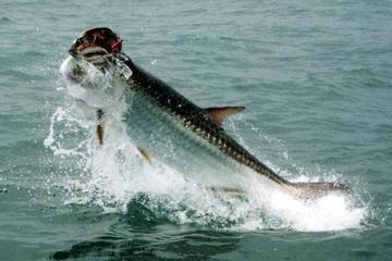 Book Port St Joe Inshore Fishing Charter on Viator