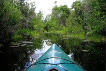 Paddle the Swamp: Kanu und Kajak Louisiana Bayou Tour