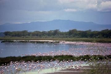 Full-Day Lake Nakuru National Park...