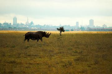 Half-Day Nairobi National Park Tour...