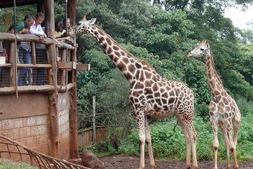 Out of Africa Tour: Giraffe Centre...