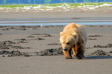 Alaska Bear-Viewing Day Trip from