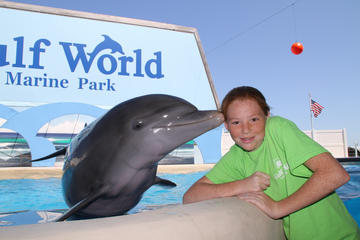 Dolphin Meet and Greet at Gulf World Marine Park