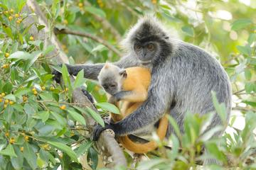 Back to Nature - Paddy Field,Fishing,Silver Leaf Monkeys & Firefiles Tour