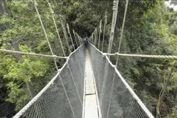 Kinabalu Park & Poring Hot Springs Tour From Kota Kinabalu