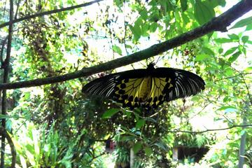 KL Butterfly Park Admission Ticket & Free Kuala Lumpur City Tour
