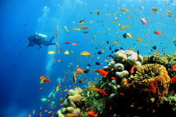 Kota Kinabalu Discover Scuba Diving