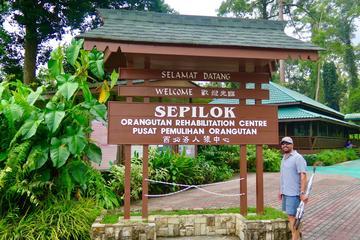 Kota Kinabalu Full day Sepilok Orang Utan Sandakan Nature City Tour