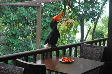 Kuala Lumpur Bird Park Tour With Transfer