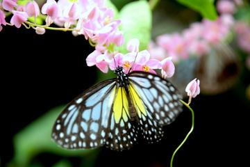 Kuala Lumpur Go Nature And Garden Private Tour