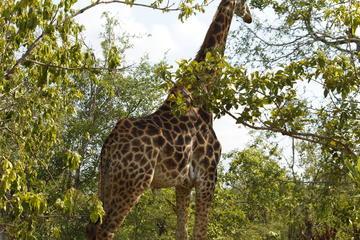 4 Days Magical Kruger National Park Safari with Panorama Tour