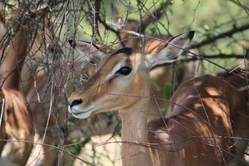 Kruger National Park 2 Days 1 Night Magical Safari from Johannesburg