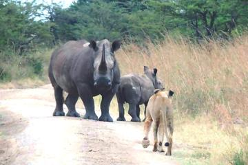 Kruger National Park 3 Days 2 Nights Classic Safari from Johannesburg