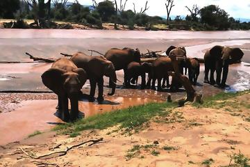 Kruger National Park Day Tour from...