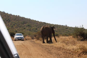 Pillanesburg National Park Safari...
