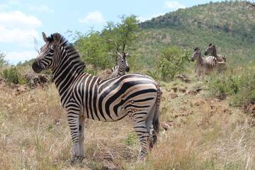 Pillanesburg National Park Safari ...