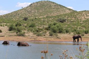 Private Pilanesberg National Park ...