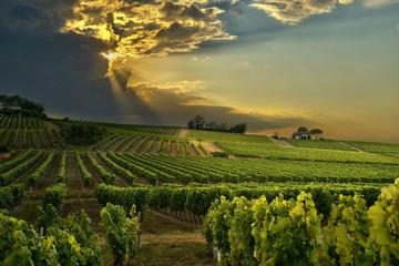 Full-Day Cape Winelands Private Tour...