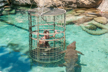 Full Day Crocodile Cage Diving and...