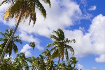 Excursión al extremo oriente de Bahamas y al parque nacional de...