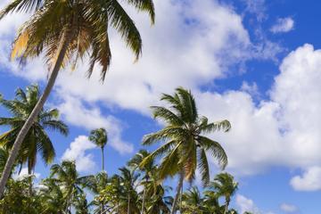 Excursion à l'extrémité orientale des Bahamas et au parc national...