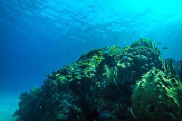 Semi-Submarine Manatí or Nautilus Experience in San Andrés