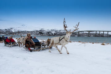 Reindeer Sledding, Lasso Throwing and Sami Culture Including Lunch in ...