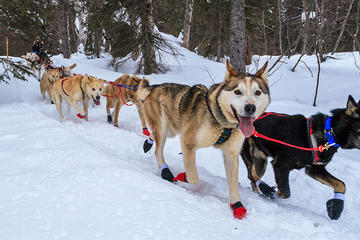 4-hour Dog Sledding and Kennel Small Group Tour