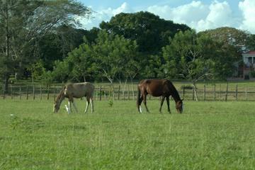 Countryside Horseback Riding Tour from Belize City