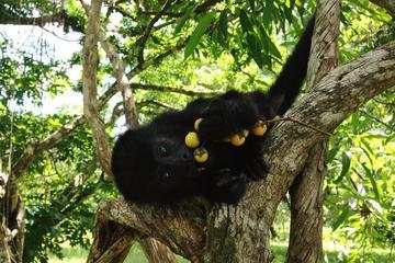 Howler Monkey Sanctuary Shore Excursion from Belize City