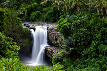 Full Day Ubud Tour with waterfall and kecak fire dance in batubulan village
