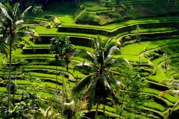 Ubud Bali Private Tour Driver