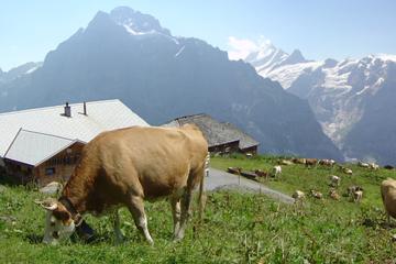 Excursion-découverte de la campagne et des traditions suisses, au...