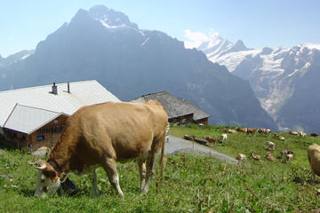Switzerland Countryside and Traditions Tour